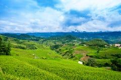 Le riz met en place sur la terrasse dans la saison des pluies à la La Pan Tan, MU Cang Chai Images libres de droits
