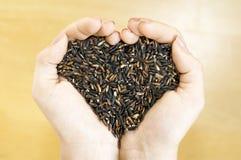 Beau riz noir de jasmin Photos libres de droits