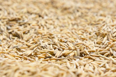 Le riz non-décortiqué, riz non-décortiqué a pour ne pas écosser  Photo libre de droits