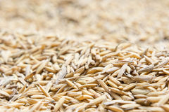 Le riz non-décortiqué, riz non-décortiqué a pour ne pas écosser  photos libres de droits