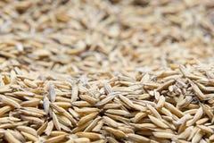 Le riz non-décortiqué, riz non-décortiqué a pour ne pas écosser  photographie stock