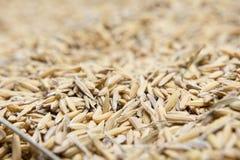 Le riz non-décortiqué, riz non-décortiqué a pour ne pas écosser  Image libre de droits