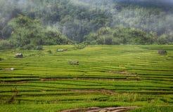 Le riz a piloté le cham de montant éligible maximum Image libre de droits