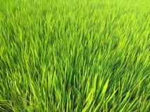 Le riz a rempli photographie stock