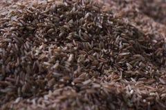 Le riz rouge est un aliment sain Images stock