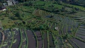 Le riz vert met en place, engazonne, des palmiers, tirant de l'air mavic de bourdon d'avions pro, avance d'appareil-photo, Bali I clips vidéos