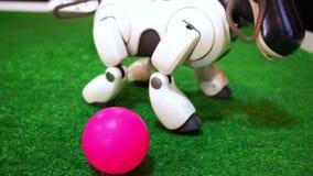 Le robot blanc de chien déplace des jambes banque de vidéos