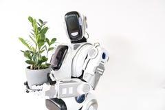Le robot intelligent se tient avec le pot de fleur Photo libre de droits