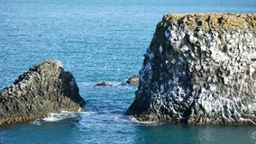 Le rocce dell'uccello del gabbiano annidano stock footage