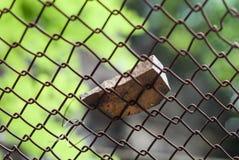 Le rockfall en pierre en baisse de roche glissent le macro protecteur de plan rapproché de barrière de barrière Photographie stock libre de droits