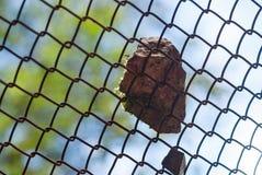 Le rockfall en pierre en baisse de roche glissent le macro protecteur de plan rapproché de barrière de barrière Photo stock
