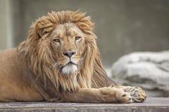 Le roi Images libres de droits
