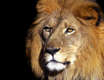 Le roi image libre de droits