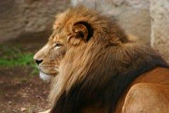 Le roi Photo libre de droits