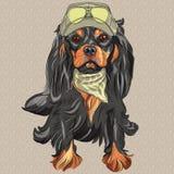 Le Roi cavalier Charles Span de chien mignon de hippie de vecteur illustration de vecteur