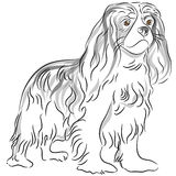 Le Roi cavalier Charles Spaniel Drawing illustration stock