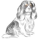 Le Roi Charles Spaniel Dog d'Avalier illustration de vecteur