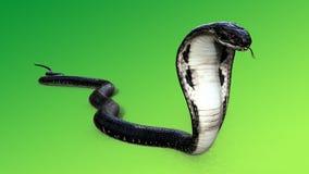 Le Roi Cobra Black Snake et Red Eye Photographie stock libre de droits