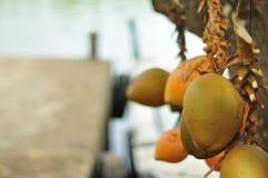 Le Roi Coconuts à vendre près d'une rivière, Sri Lanka photo stock