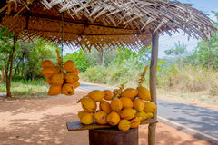Le Roi Coconuts Are Displayed pour la vente sur la petite stalle de bord de la route dans Sigiriya photographie stock libre de droits