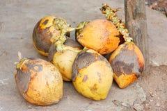 Le Roi Coconuts et x28 ; Thembili& x29 ; à un kiosque de fruit sur la route Sri Lanka image stock