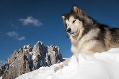 Le roi de la montagne Image libre de droits