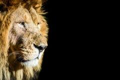 Le Roi Lion images libres de droits