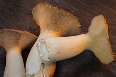 Le Roi Oyster Mushrooms Images libres de droits