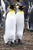 Le Roi Penguin - couple rêvant l'avenir Photographie stock libre de droits
