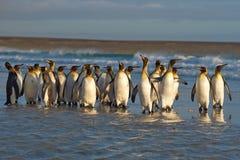 Le Roi Penguins dans le ressac Photo libre de droits