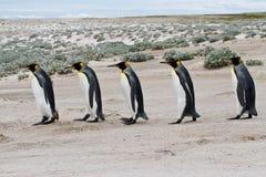 Le Roi Penguins marchant dans une rangée Photo libre de droits