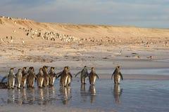 Le Roi Penguins sur la plage Photographie stock