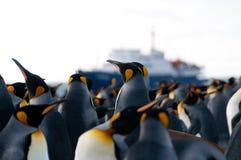 Le Roi Penguins sur le port d'or Image libre de droits