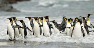 Le Roi pingouins dans la vague déferlante Photos libres de droits