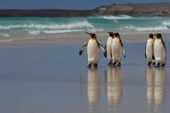 Le Roi pingouins - Malouines Photographie stock libre de droits