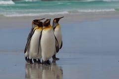 Le Roi pingouins - Malouines Image libre de droits