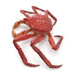 Le Roi rouge Crab Kamchatka Isolated sur le fond blanc illustration 3D illustration stock