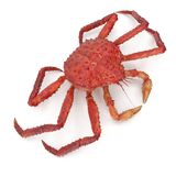 Le Roi rouge Crab Kamchatka Isolated sur le fond blanc illustration 3D illustration de vecteur