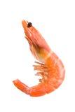 Le Roi Shrimp image libre de droits