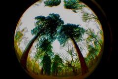 Le rond, cercle, a courbé le ciel abstrait, arbres, remous image stock