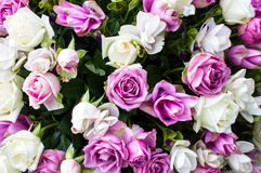 Le rose applicano la progettazione ed il fondo Immagine Stock