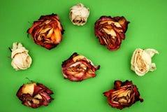 Le rose asciutte del colorfull Fotografia Stock