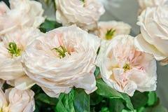 Le rose bianche con il mezzo verde è una selezione originale di grande mazzo sulla vendita nel mercato del fiore Varietà moderne  Fotografie Stock