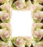 Le rose bianche incorniciano il bordo Fotografie Stock Libere da Diritti