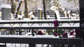Le rose dei fiori si trovano sulla tomba in cimitero o in cimitero nell'inverno in foresta stock footage