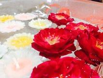 Le rose di galleggiamento Immagine Stock