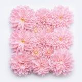 Le rose en pastel créatif fleurit à plat la configuration, vue supérieure, verticale Disposition ou carte de voeux Photo libre de droits
