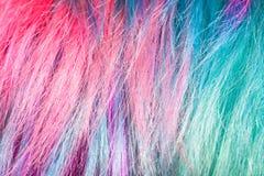 Le rose et le vert ont coloré des mèches des poils femelles photos libres de droits