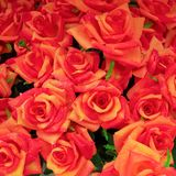 Le rose false arancione scuro si chiudono Immagine Stock