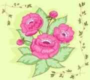 Le rose fleurit la carte de bouquet. Photo libre de droits